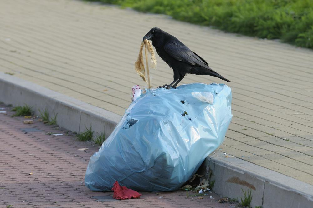 もううんざり! ゴミ捨て場のカラス被害に悩まされない方法とは?